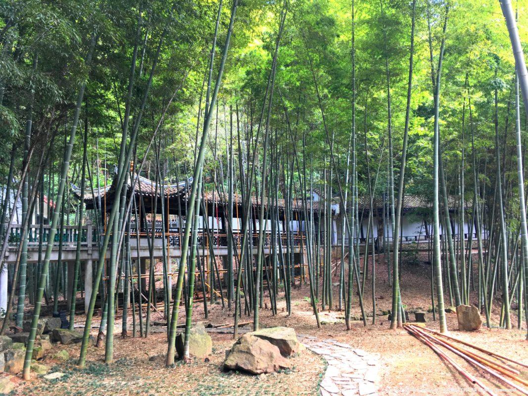 長沙の岳麓書院の竹林