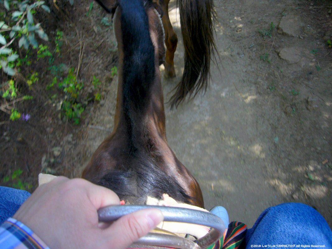 麗江の茶馬古道ツアーの乗馬