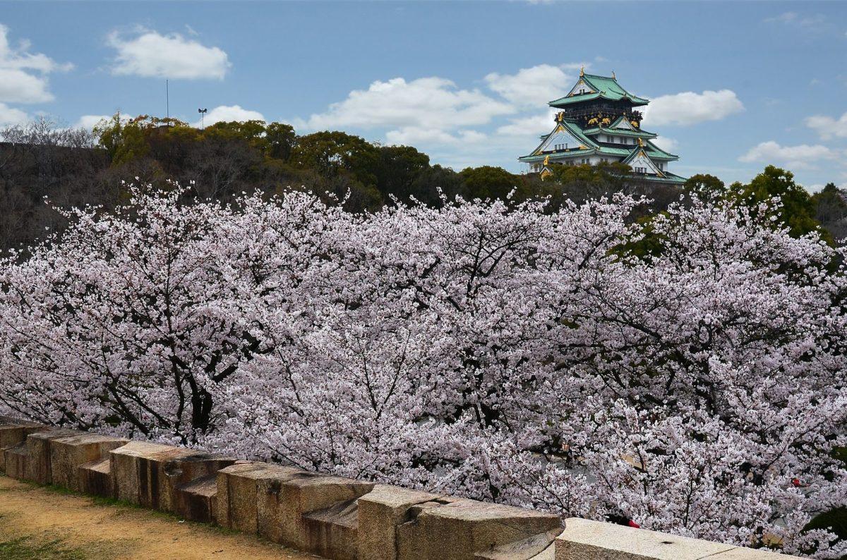 大阪城とサクラ
