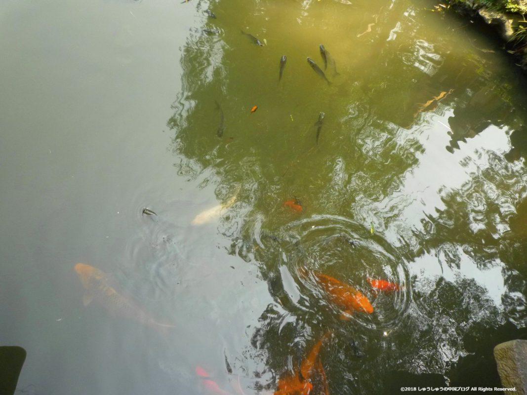 蘇州の拙政園の池