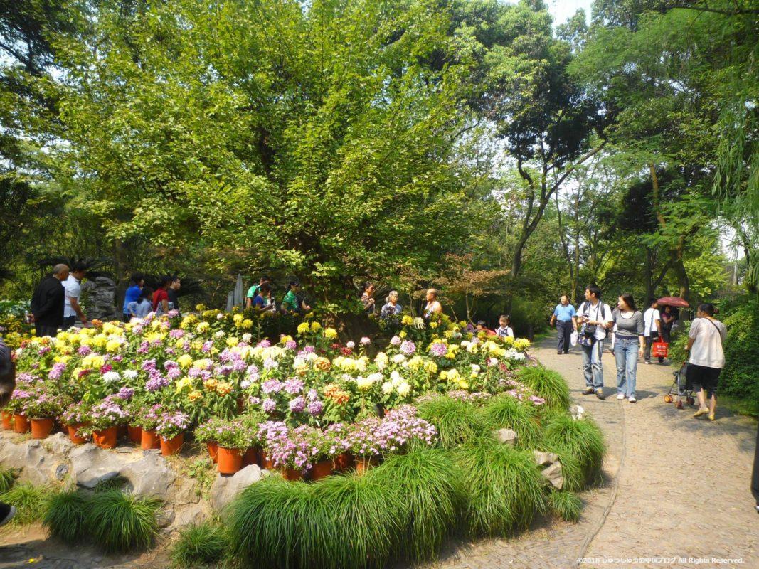 蘇州の拙政園の花