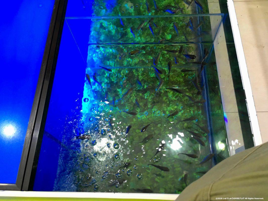 角質層を食べてくれる魚が入っている水槽